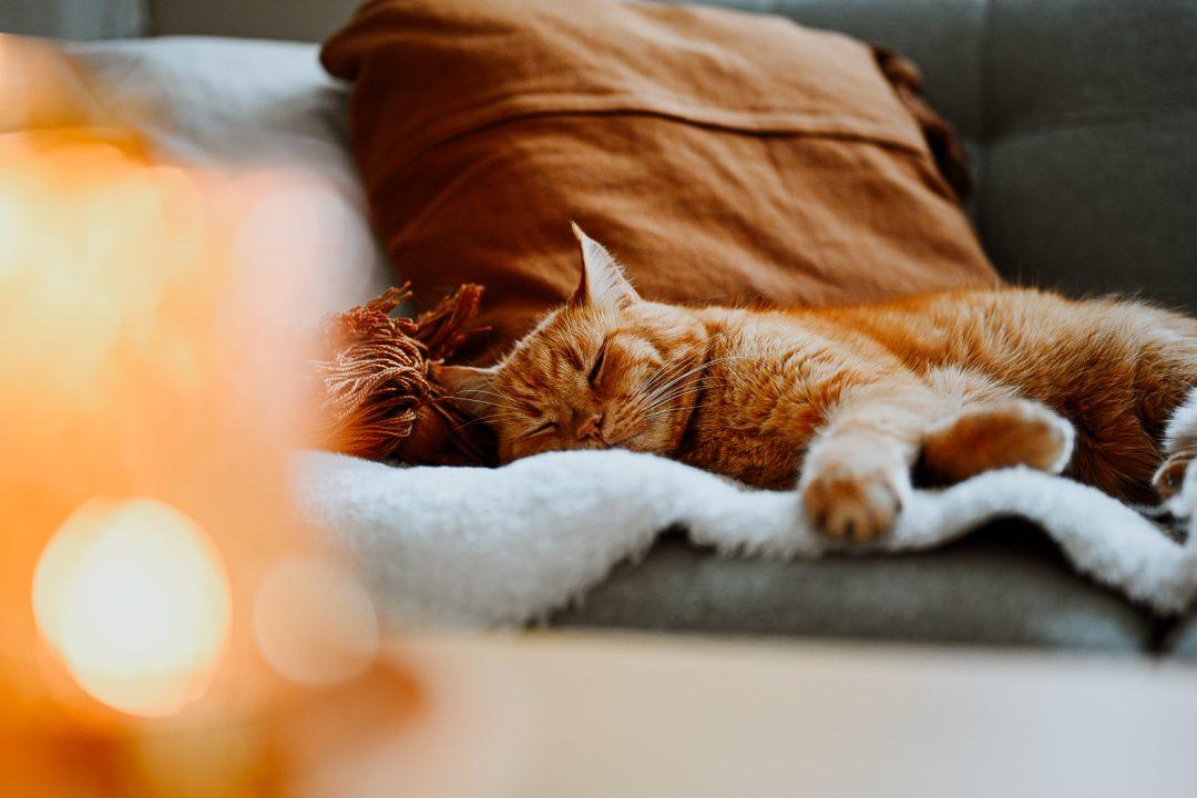 Fernandez vår katt